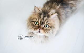 γάτα και επικοινωνία