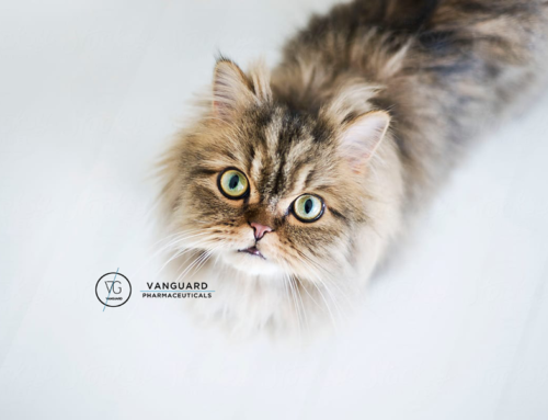 6 τρόποι να «μιλήσεις» με τη γάτα σου.